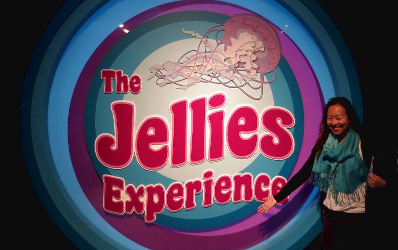jellies experience exhibit
